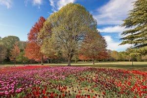 Jardin de Cheverny